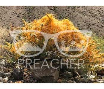 Desert Spaghetti - Download