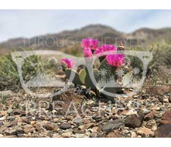 Hot Pink on the Rocks - Download