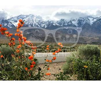 Orange Blossom, California Highway - Download